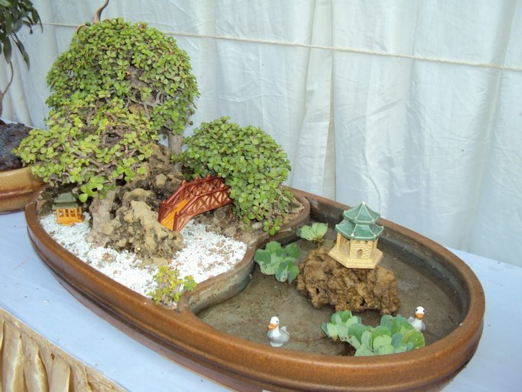 cultivo-cuidado-bonsai-decoracion-casa