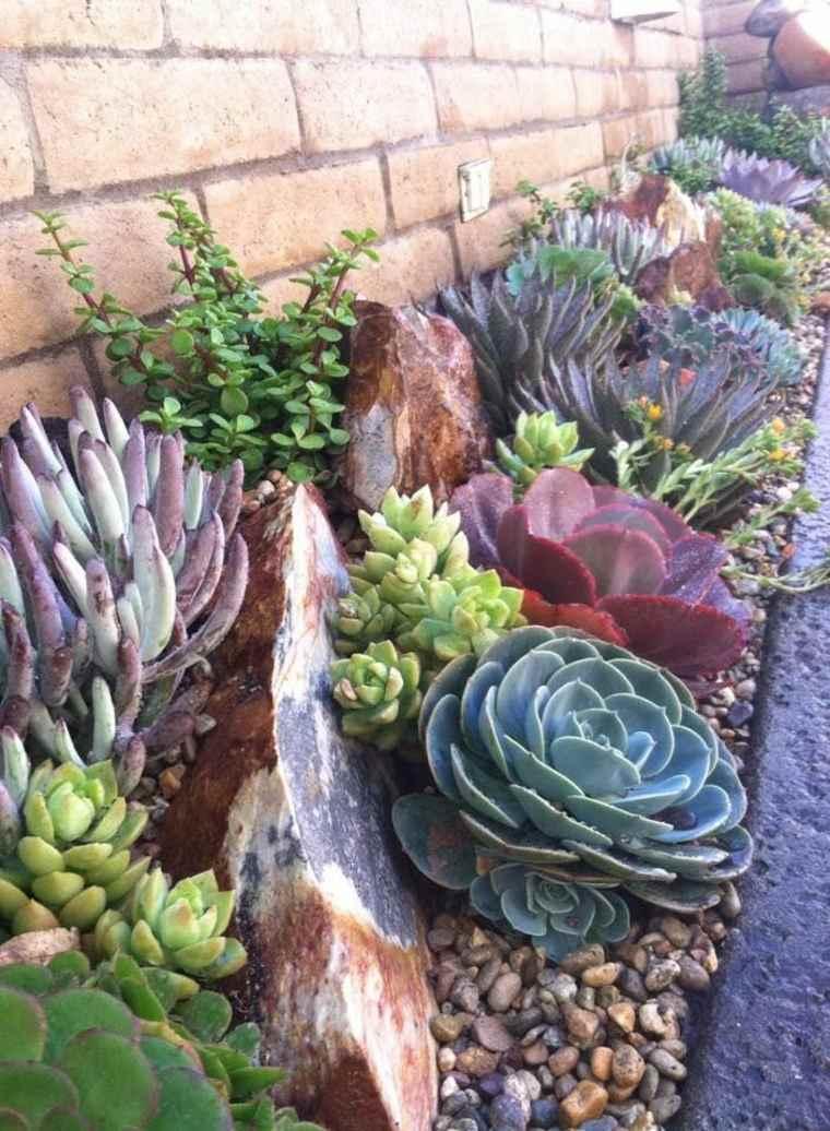 Cactus Y Suculentas Para Jardines Y Patios De Exterior