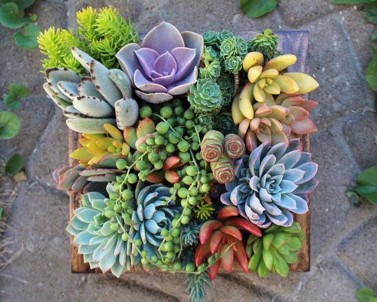 jardines verticales con suculentas