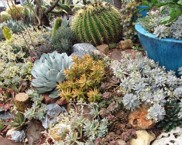 paisaje moderno con cactus