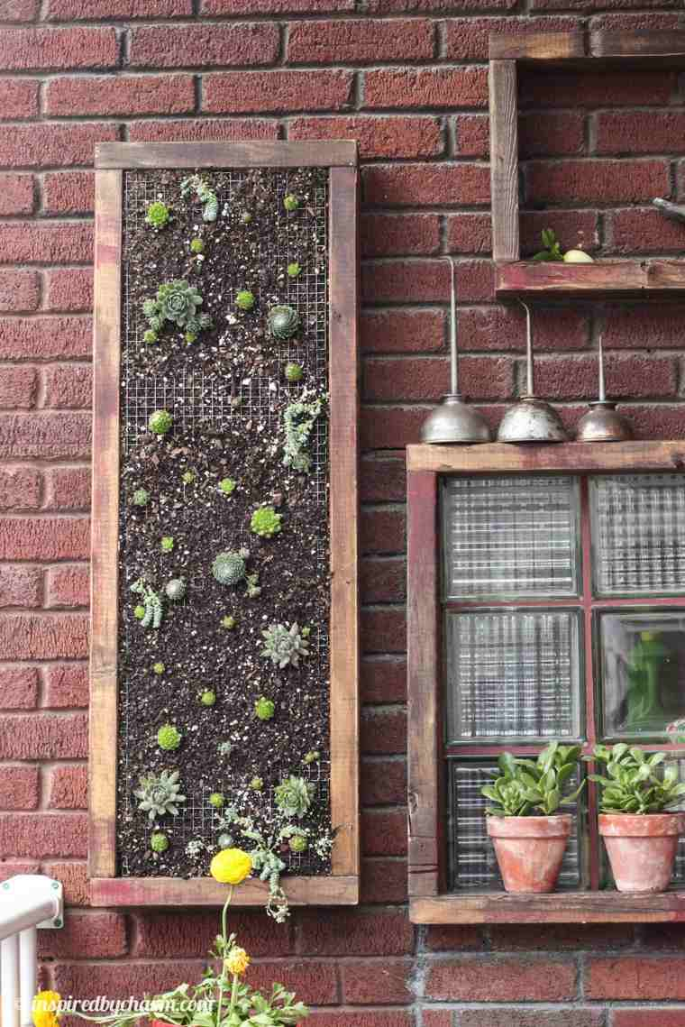 selección de plantas suculentas