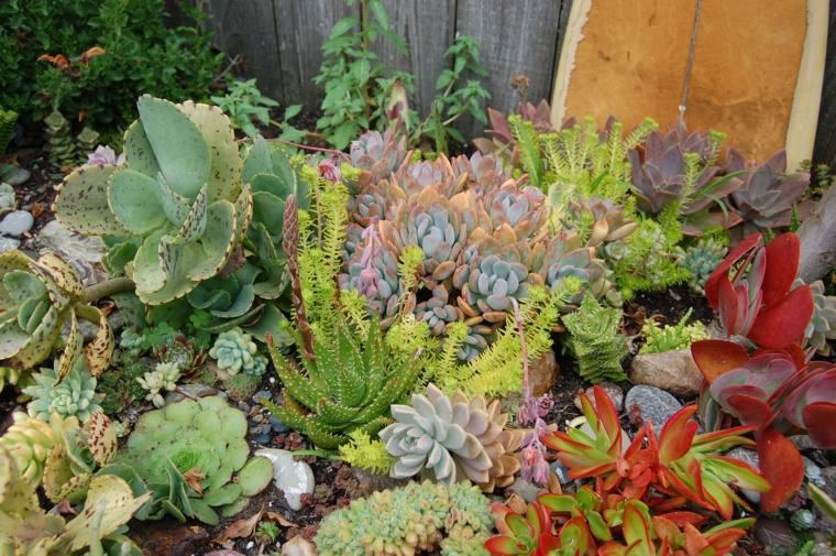 bonita mezcla de plantas