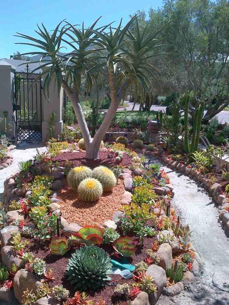 oasis de plantas suculentas
