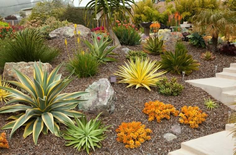 plantas suculentas de colores