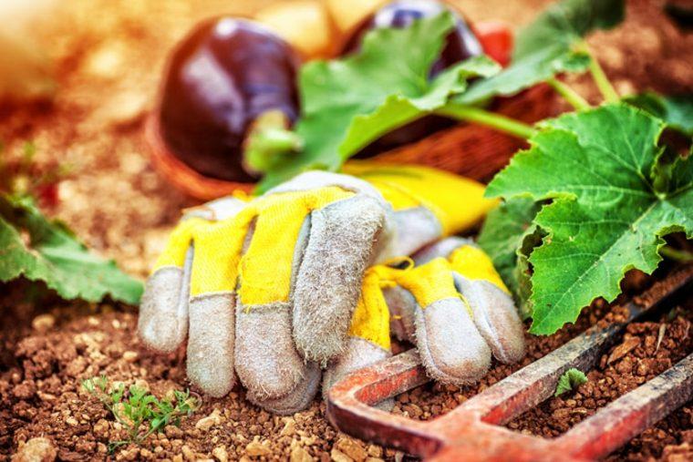 añadir compost a la tierra