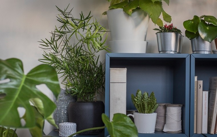 catalogo-de-ikea-2018-ideas-decoracion-plantas
