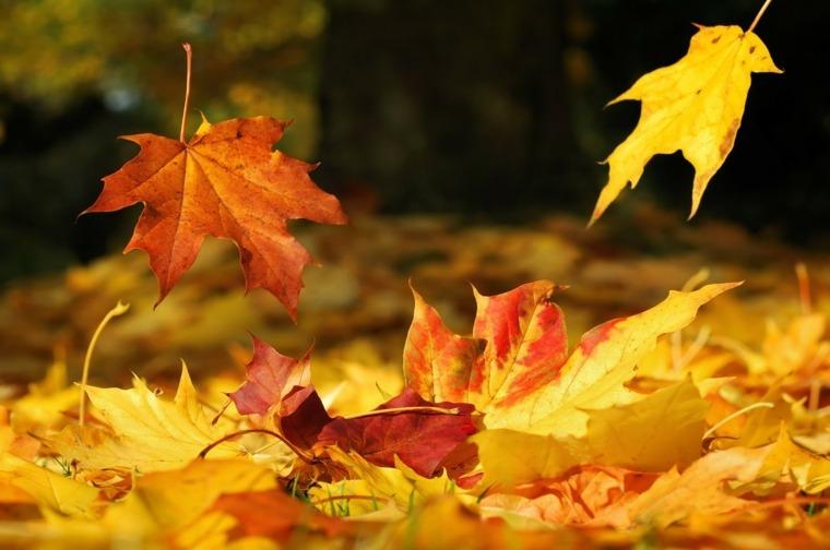 caída de las hojas secas