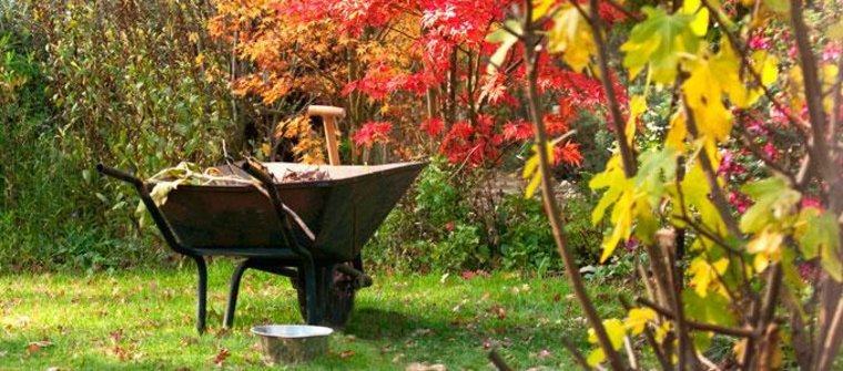 cuidados para el jardín