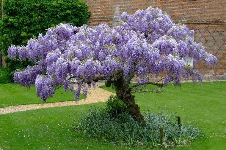 ideas para decorar un patio con wisteria