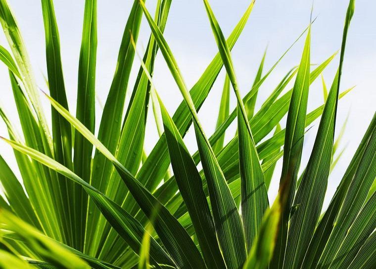 como-atraer-la-buena-suerte-segun-feng-shui-plantas