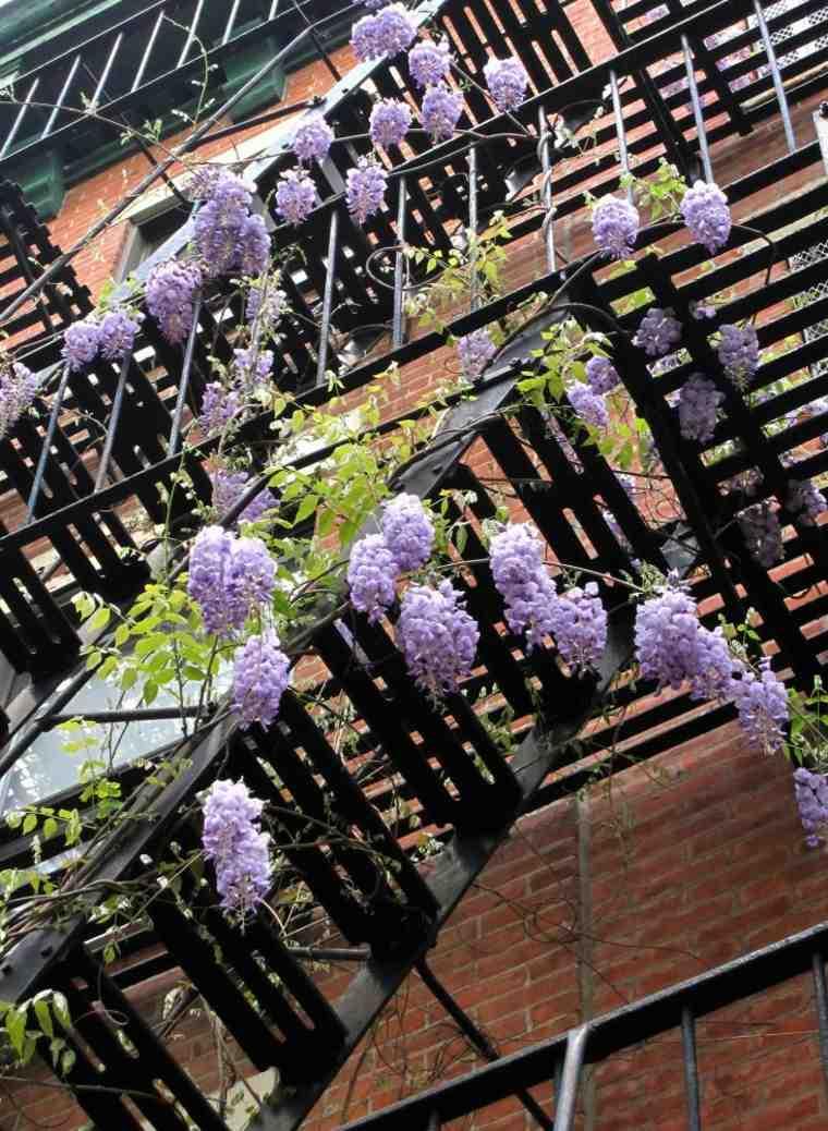 decorar el jardín con glicinias
