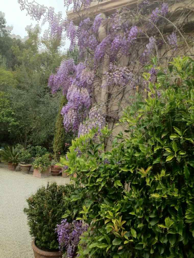 bonito jardín con glicinias