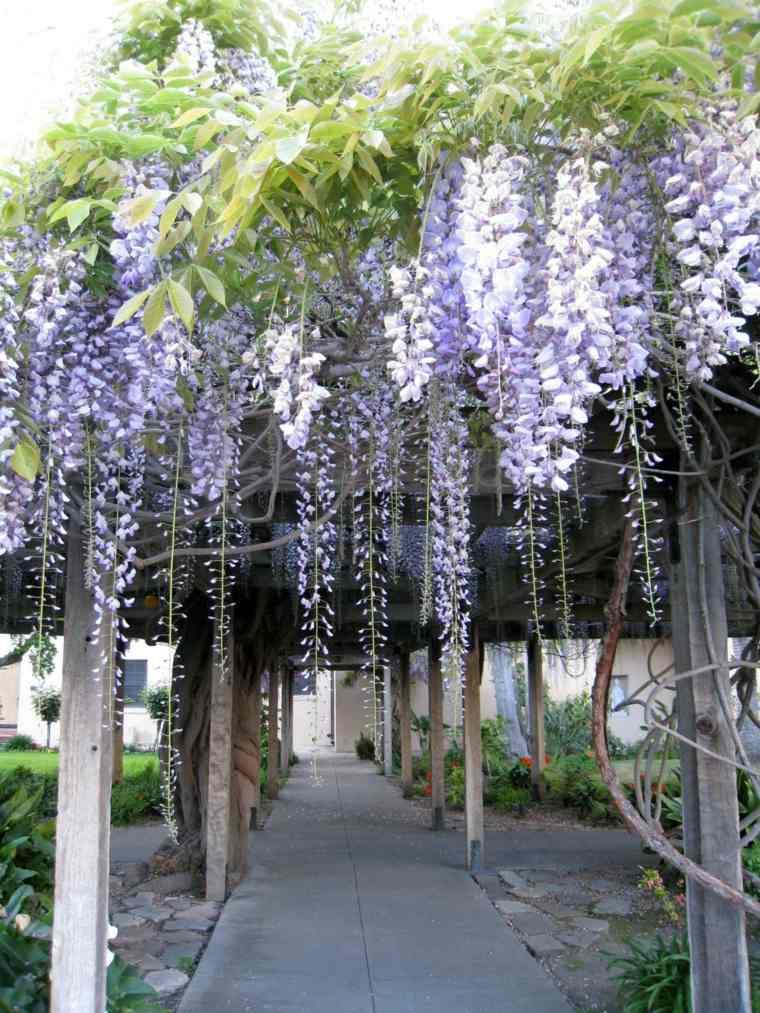 estupendas ideas para decorar un jardín con glicinias
