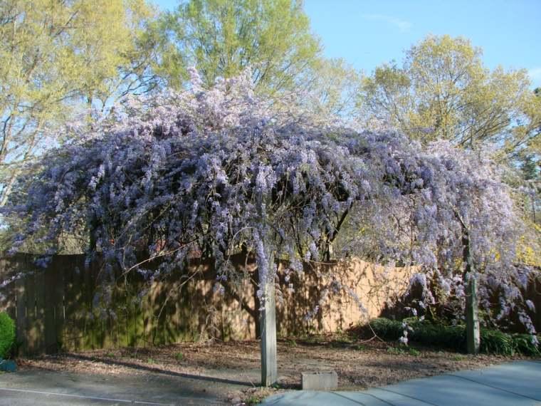decorar un patio con wisterias