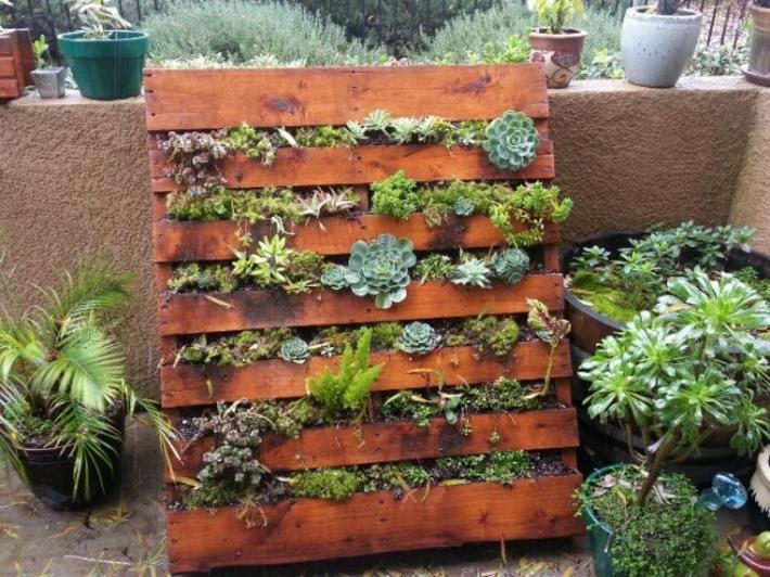 suculentas plantadas jardines verticales