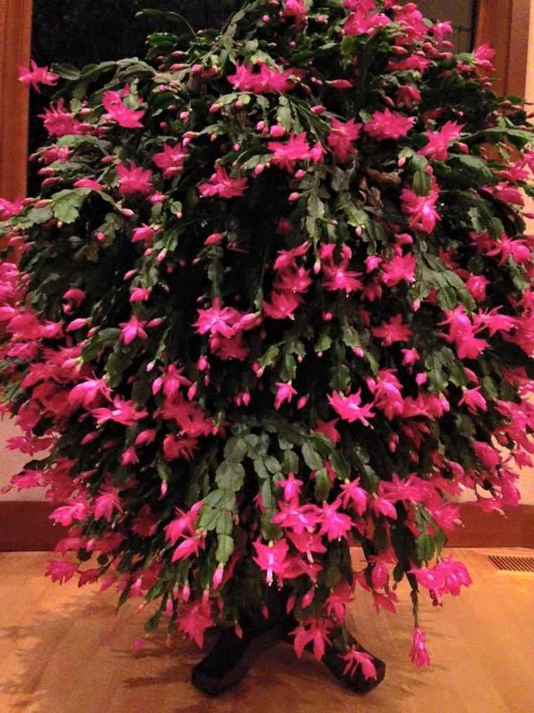 arbusto de cactus