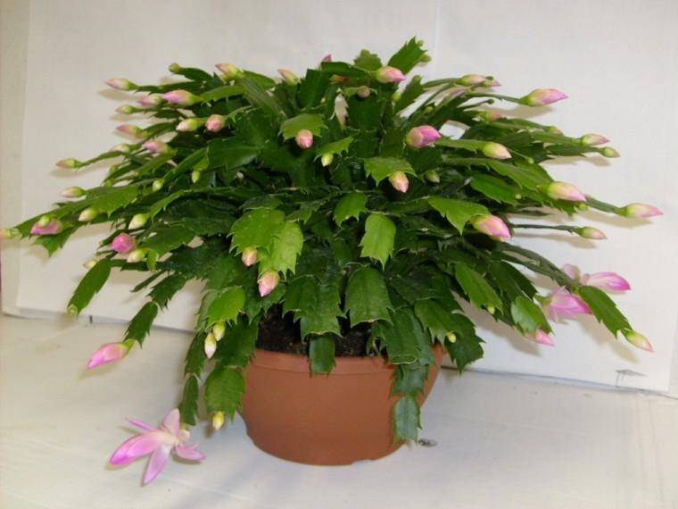 planta en maceta