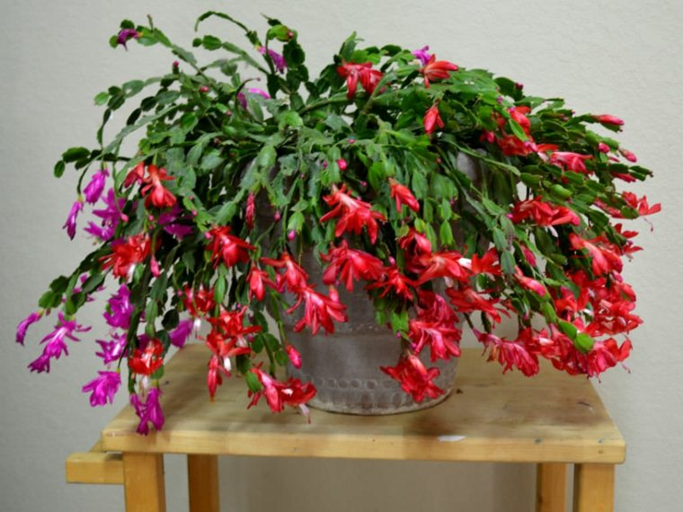 hermosas flores rosa y rojo