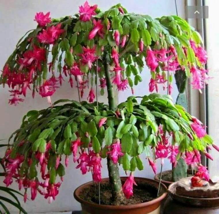 planta con muchas flores