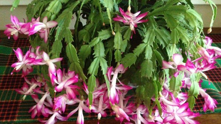 bonito cactus