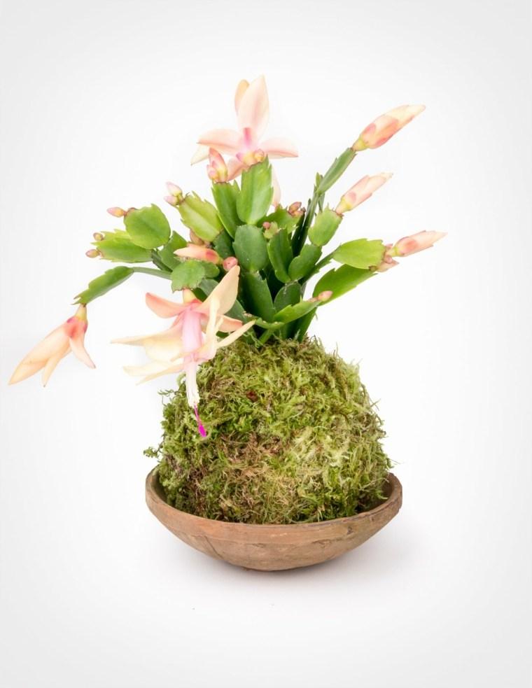 centro de mesa con cactus y musgo