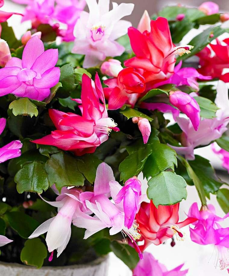 planta con hermosas flores