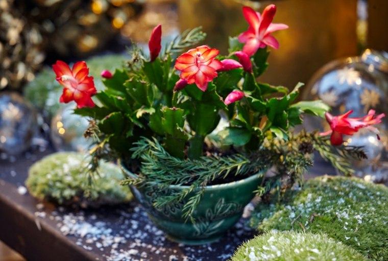 planta con bonitas flores rojas