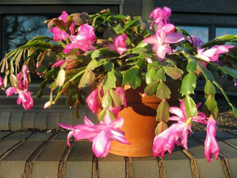 planta con flores de color rosa