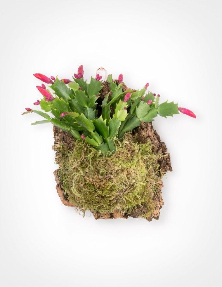 centro de mesa con cactus de Navidad y musgo
