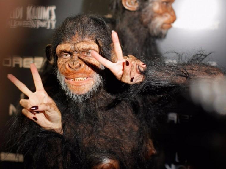 Heidi-Klum-chimpance
