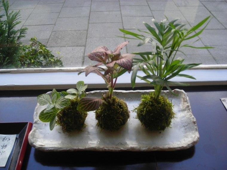 centro mesa kokedama japon