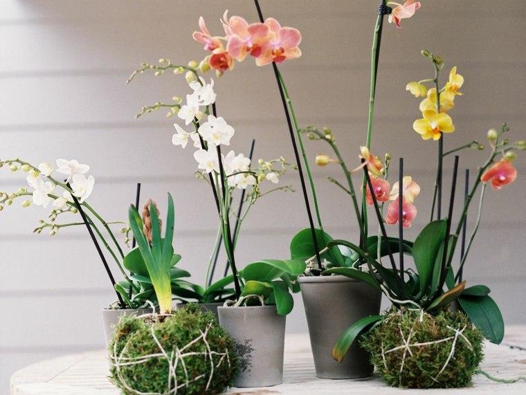 destacandose entre otras plantas