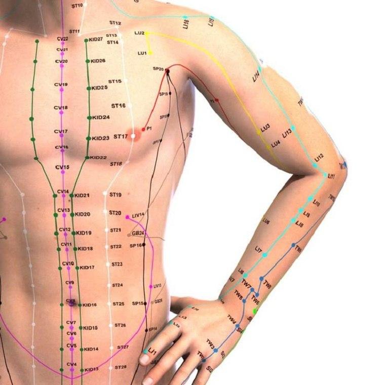 detalles meridianos abdominales brazos