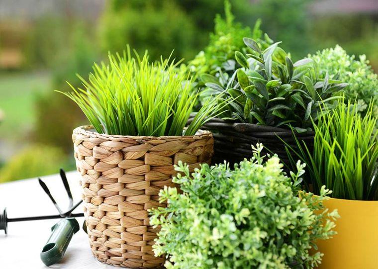 distribucion diversas texturas plantas