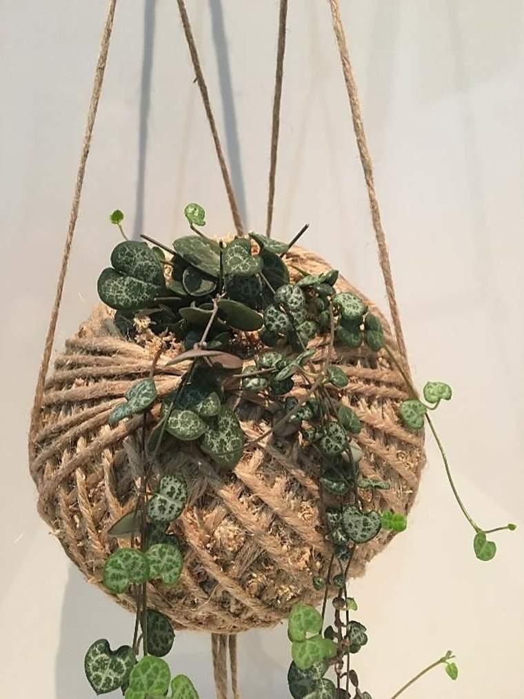 elegante planta colgadora cascada
