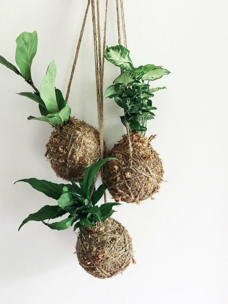 plantas de jardin ideas colgantes