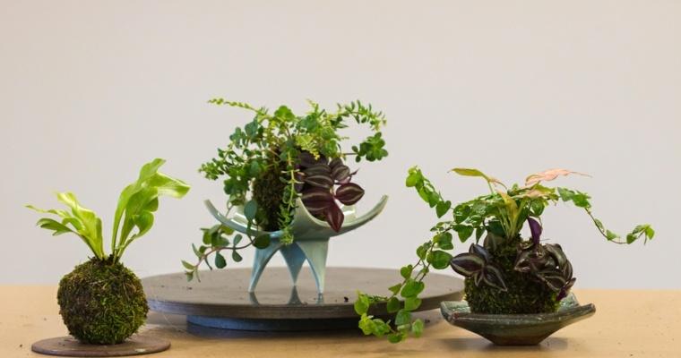 plantas de jardin ideas efectos