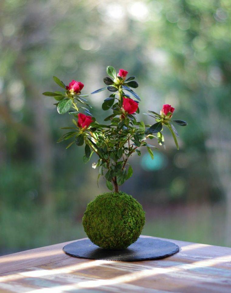 plantas de jardin ideas flores