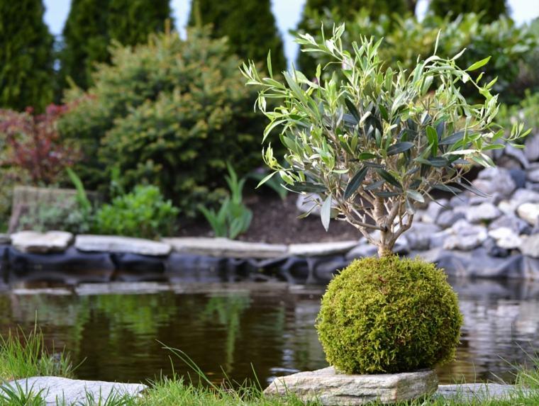 plantas de jardin ideas increibles tamaños