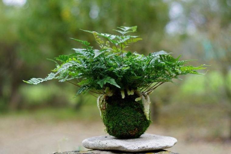 plantas de jardin ideas roca plana