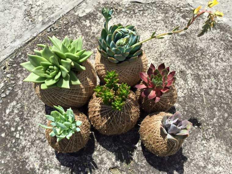 suculentas plantas concepto efectivo