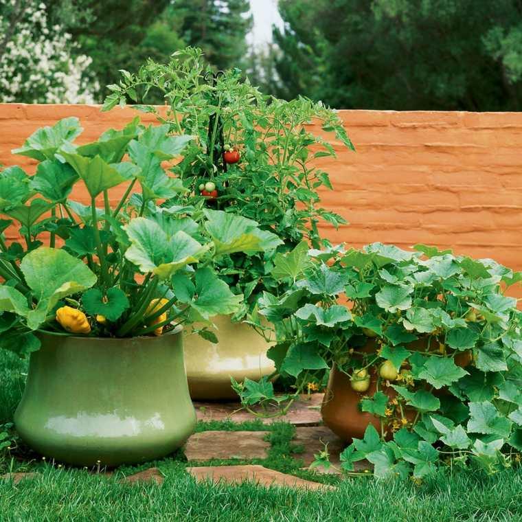 vegetales macetas coloridas exteriores