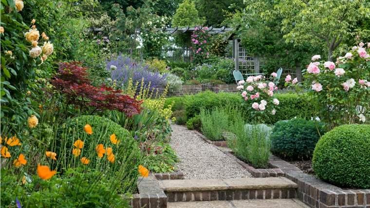 decorative-shrubs