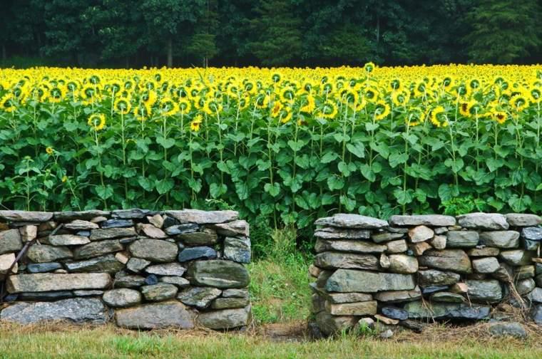 muros asombroso espacio ideas abierto