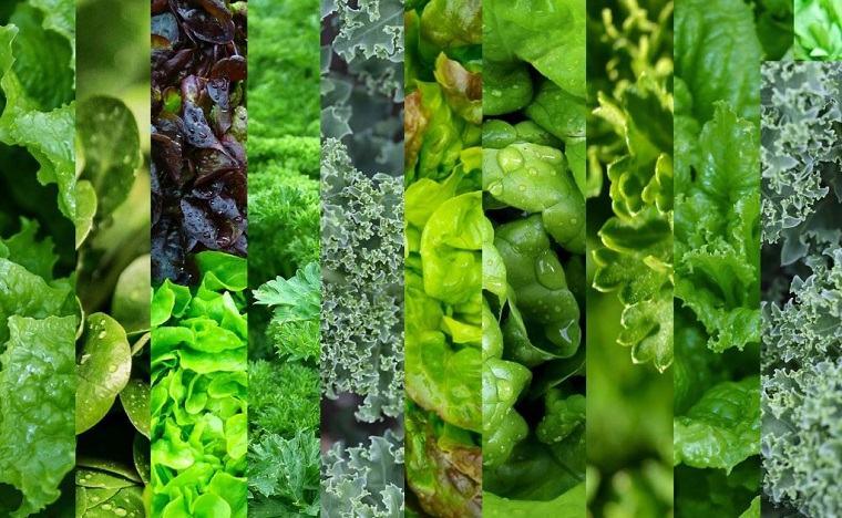 comidas-de-verano-recetas-opciones-ensaladas-verdes-frescas