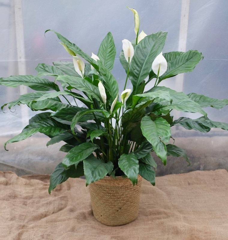 decoraciones-plantas-verdes-concepto