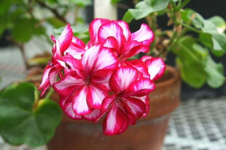 flores-rosa-ambiente-saludable