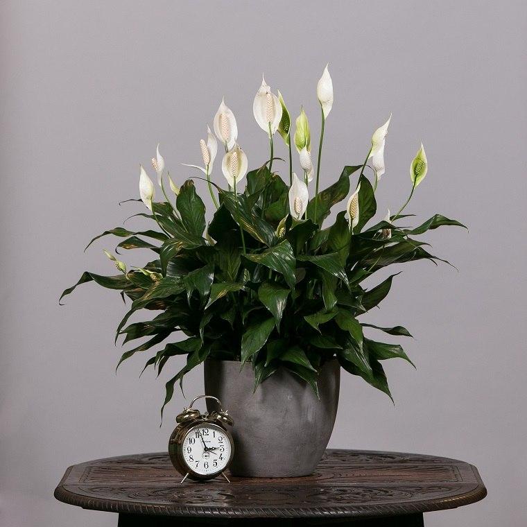 plantas-flores-interior-ambiente