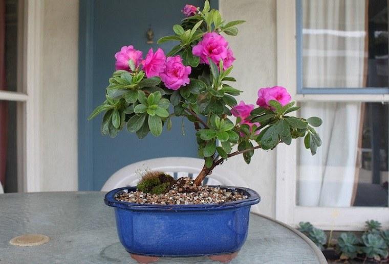 plantas ornamentales detalles azalea