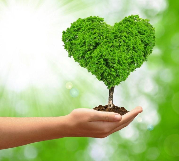té verde ayuda-al-corazon